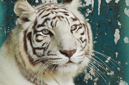 距離が近くて迫力満点!フィリピンのおすすめ動物園