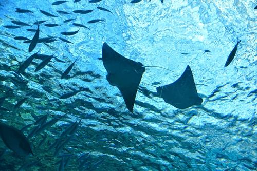 フィリピン最大級の水族館「マニラ・オーシャンパーク」